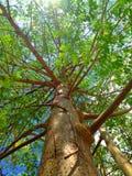 Ramo de árvore Imagem de Stock