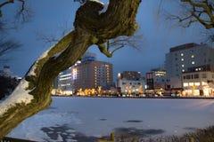 Ramo de árvore Fotografia de Stock