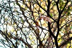 Ramo de árvore Imagem de Stock Royalty Free