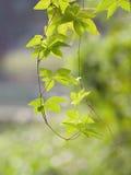 Ramo de árvore fotos de stock royalty free