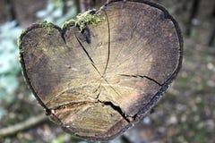 Ramo de árvore Imagens de Stock