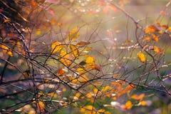 Ramo de árvore bonito na luz solar do outono Foto de Stock Royalty Free