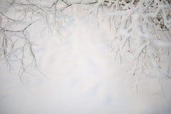 Ramo de árvore branco do inverno no fundo da neve no inverno Fotos de Stock Royalty Free