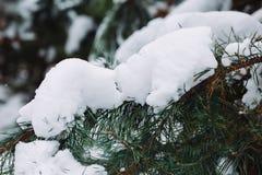 Ramo de árvore coberto de neve no por do sol Imagens de Stock Royalty Free