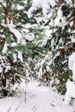 Ramo de árvore coberto de neve no por do sol Imagens de Stock