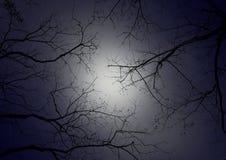 Ramo de árvore contra o céu noturno imagens de stock