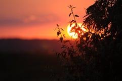Ramo de árvore contra o contexto do sol de ajuste Foto de Stock