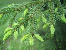 Ramo de árvore da pele, close-up Fotos de Stock Royalty Free