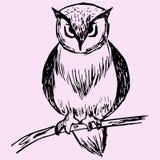 Ramo de árvore de Owl On Fotos de Stock
