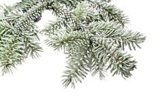 Ramo de árvore do abeto com neve Imagens de Stock Royalty Free