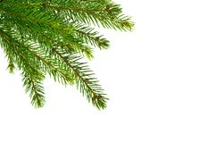 Ramo de árvore do abeto isolado em um branco Imagens de Stock