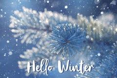 Ramo de árvore do abeto na geada em tons do blueness Olá! cartão do inverno imagens de stock royalty free