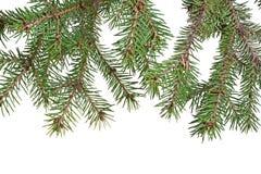 Ramo de árvore do Natal Foto de Stock Royalty Free