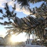 Ramo de árvore do Natal contra o sol imagem de stock