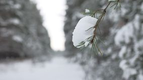 Ramo de árvore do Natal na paisagem bonita da floresta da natureza do inverno da neve, fundo borrado Imagens de Stock Royalty Free
