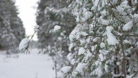 Ramo de árvore do Natal na paisagem bonita da natureza da floresta do inverno da neve, fundo borrado Fotografia de Stock