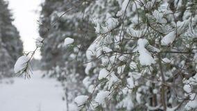 Ramo de árvore do Natal na paisagem bonita da natureza da floresta do inverno da neve, fundo borrado Fotos de Stock Royalty Free
