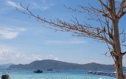 Ramo de árvore e céu azul do espaço livre do mar Foto de Stock Royalty Free