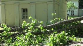 Ramo de árvore enorme caído na cerca residencial da casa após a tempestade vídeos de arquivo