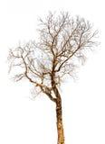 Ramo de árvore isolado fotografia de stock royalty free