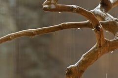 Ramo de árvore molhado Imagens de Stock Royalty Free