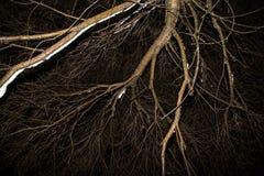 Ramo de árvore na noite no inverno no fundo escuro do céu foto de stock