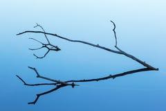 Ramo de árvore na silhueta Fotos de Stock