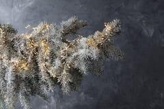 Ramo de árvore nevado do abeto do Natal no fundo cinzento gelado fotografia de stock royalty free
