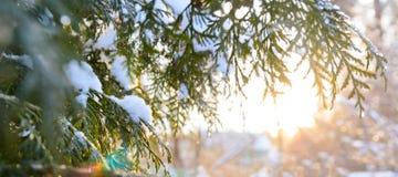 Ramo de árvore nevado no por do sol foto de stock