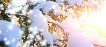 Ramo de árvore nevado no por do sol fotos de stock
