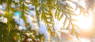 Ramo de árvore nevado no por do sol foto de stock royalty free