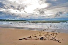Ramo de árvore pela praia Imagens de Stock Royalty Free