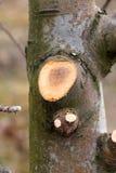 Ramo de árvore podado da maçã, DOF raso imagens de stock royalty free