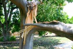 Ramo de árvore quebrado fotos de stock