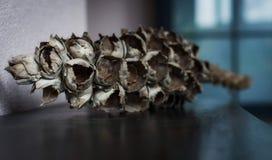 Ramo de árvore seco do coco imagem de stock