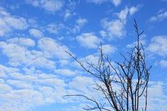 Ramo de árvore seco e céu azul Foto de Stock Royalty Free