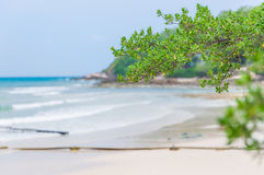 Ramo de árvore sobre a praia imagem de stock