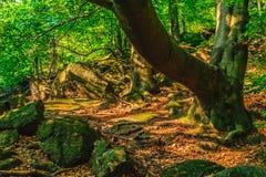 Ramo de árvore sobre um trajeto rochoso foto de stock