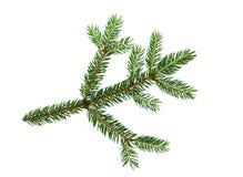 Ramo de árvore spruce fresco verde isolado no fundo branco foto de stock