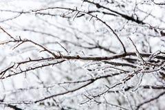 Ramo de árvore vitrificado após a tempestade de gelo do inverno, a neve e a chuva congelada Fotografia de Stock Royalty Free