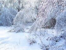 Ramo de árvore vitrificado após a tempestade de gelo do inverno, a neve e a chuva congelada Imagem de Stock Royalty Free