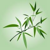 Ramo de bambu Fotografia de Stock