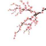 Ramo de Cherry Blossom Eps 10 Foto de Stock Royalty Free