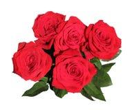 Ramo de cinco rosas rojas en gotas de rocío en blanco Foto de archivo libre de regalías