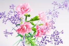Ramo de claveles rosados Imagenes de archivo
