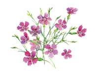 Ramo de claveles rosados salvajes stock de ilustración