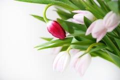 Ramo de colores hermosos, delicados, hermosos de tulipanes Foto de archivo