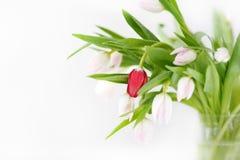 Ramo de colores hermosos, delicados, hermosos de tulipanes Imagenes de archivo