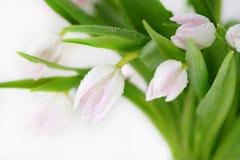 Ramo de colores hermosos, delicados, hermosos de tulipanes Fotos de archivo libres de regalías