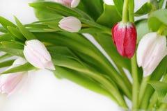Ramo de colores hermosos, delicados, hermosos de tulipanes Imagen de archivo